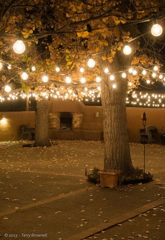 Bulb String Lights wrapped around trees #stringLights #ropeLights #lighting #lights #ledLights #stringLights #backyardLighting #outdoorLights #OutdoorLighting