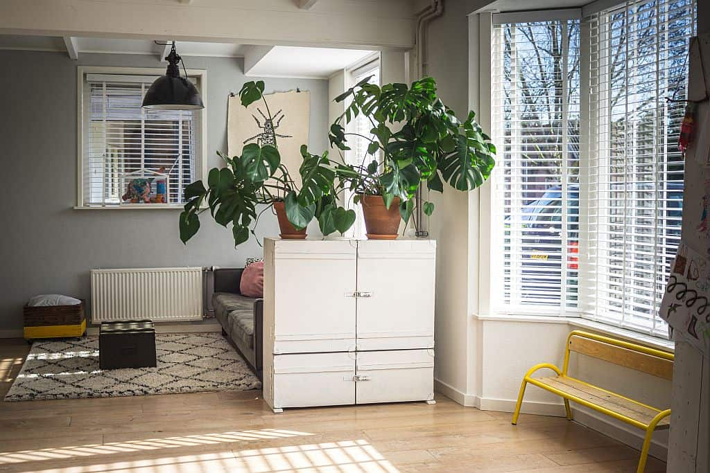 A house plant automatically livens up a room